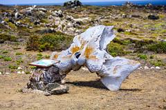 Chile 2013-3672 (sebtac) Tags: chile2013 chile 2013 outdoor 13 reserva nacional pingüino de humboldt