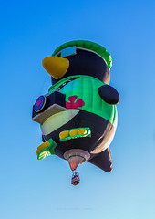 Ballon Fiesta 2016 | Sno Bird In Flight | Morning Ascension, 6:54 AM (Facundity) Tags: aibf albuquerqueinternationalballoonfiesta balloonfiestapark balloonfiesta2016 albuquerque newmexico hotairballoons morningascension whimsy colorful specialshapesrodeo specialshapes outdoorphotography outdoors canon5dmkiv ef70200mmf4lisusm