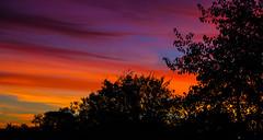 Sunrise (Steve-h) Tags: nature natur natura naturaleza natural sunrise dawn trees silhouettes colours colour red pink orange gold blue black dublin ireland europe autumn fall november 2016 digital exposure ef eos canon camera zoom lens steveh