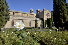 Abbaye de Fontfroide, Languedoc-Roussillon, France (nuriapase) Tags: abadia abbaye fontfroide abbayedefontfroide languedocroussillon france francia frana narbonne flor flower rosa rose blanc blanco white nature natura jardin garden church esglsia iglesia focus