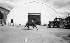 State Fair L_M6_19035 (erlin1) Tags: 2016 analog blackandwhite horse leicam6 minnesotastatefair rider stpaul statefair mn usa