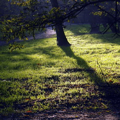 october light (1) (kexi) Tags: warsaw poland square bemowo fortbema park light grass samsung wb690 october 2015 green shadow tree instantfave