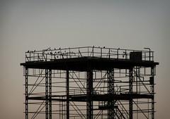 Esqueleto del pasado (Markus' Sperling) Tags: montilla crdoba amanecer birds pjaros estructura arquitectura