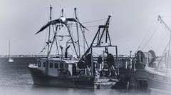 Gull and Boats (PAJ880) Tags: fishing boat pamet provincetown harbor macmillan wharf gull bw mono lower cape cod