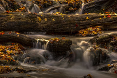 Falls in Fall (leomacdonald) Tags: owensound ontario weaverscreek harrisonpark autumn fall explore sonya7 canada leaves logs maple red green