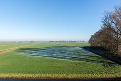 (Arthur van Beveren) Tags: nederland netherlands niederlande holland paysbas hollanda paesibassi paisesbajos overrijsel blokzijl winter cold kou ijs shadow schaduw trees bomen dauw ice field veld green groen sun zon vriezen freezing