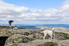 Ice the Dog in Penela da Beira (Gail at Large | Image Legacy) Tags: portugal 2015 gailatlargecom peneladabeira icethedog