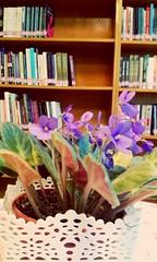 Menekseli kutuphane (elffyvzz) Tags: flower book libray kitap purble menekse kutuphane