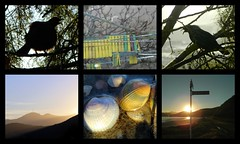Holiday memories :-) ( 3 ) (Snorkle-suz) Tags: holiday southisland newzealand aotearoa nz bird birds tui pegs peg clothesline hills hill signpost streetsign sunset shell shells mollusk gold sand water light sunsetlight goldenlight treasure myfavoritethings wet beaches outside outdoor beauty shadows tree collage silhouette nikoncoolpixl120 canonpowershotsx700hs beachtreasure beachtreasures seashells