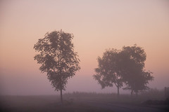 Misty pink morning