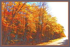 autumn (milomingo) Tags: autumn plant tree fall scenic foliage photoart cttc