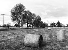 Hay wraps (n95lover) Tags: autumn herbst hay usedom heu heuballen haywrap
