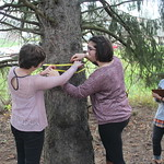 Students measure the circumference of a tree.