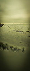 CLL018-141217-134437-1Dg,Baryta-Imp.jpg (Cristobal Llopis) Tags: paisajes lago cereales arroz charca marismas islamayor lasmarismas