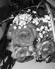 Roses (maryam.bindukhan) Tags: roses blackandwhite bw blacknwhite