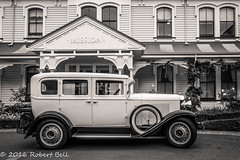 Bonnie at Mission Vineyard (zzrbell) Tags: newzealand napier hawkesbay nz