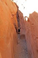 Frikka in Little Wild Horse Canyon (Bob Palin) Tags: 15fav usa dog animal 510fav canon landscape utah sandstone hiking sanrafaelswell emerycounty littlewildhorsecanyon 100vistas instantfave canonef24105mmf4lisusm frikka orig:file=2015120703904