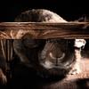 Hiding Bunny (Jeric Santiago) Tags: pet rabbit bunny animal conejo under hiding lapin kaninchen うさぎ 兎 winterrabbit