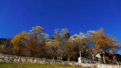 Περτουλι P1150637 (omirou56) Tags: travel blue trees sky nature colors europe natur natura greece 169 μπλε ελλαδα φυση δεντρα χρωματα εκδρομη ταξιδι ουρανοσ ευρωπη δασοσ φθινοπωρο περτουλι panasoniclumixdmctz40