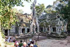 "The ""Angelia Jolie"" Tree, Ta Prohm, Cambodia (Yooch) Tags: tree giant temple ruins asia cambodia tomb roots landmark angelinajolie angelina jolie angkor taprohm ta tombraider prohm raider"