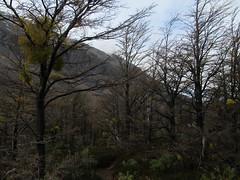 """Torres del Paine: trek du W et toutes ses belles couleurs. <a style=""""margin-left:10px; font-size:0.8em;"""" href=""""http://www.flickr.com/photos/127723101@N04/29595330534/"""" target=""""_blank"""">@flickr</a>"""