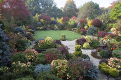 Colours of mid autumn in the upper garden (21st October) (Four Seasons Garden) Tags: four seasons garden uk england autumn october 2016 colours foliage yorksone japanese maple acer ornamental conifers evergreens sunlight begonia flowers red blue yellow orange palmatum