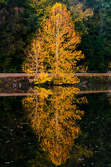 BMC_LR-2656 (bradley_campbell) Tags: tree fall yellow reflection indiana brown county