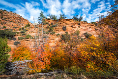 To the Zion Narrows! Nikon D810 Fine Art Zion National Park Autumn Hike! Dr. Elliot McGucken Fine Art Landscape Photography! (45SURF Hero's Odyssey Mythology Landscapes & Godde) Tags: to zion narrows nikon d810 fine art national park autumn hike dr elliot mcgucken landscape photography landscapes nature arts natural bryce canyonautumn winter hdr majestic leaves maples cottonwoods np