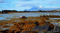 A beach for seals (alcoyote89) Tags: iceland snaefellsnes greyseal beach rock algae sky coast