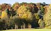 Autumn_7 (plastalg) Tags: autumngold