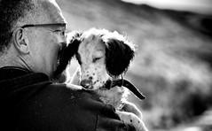 Tired Puppy ...... (Missy Jussy) Tags: rupert trevorkerr dog man dogwalk portrait england englishspringer springerspaniel spaniel canon cannon600d canon70200mm blackwhite blackandwhite bw mono monochrome littledoglaughednoiret