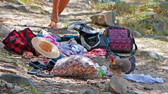 hasty getaway (Leonard J Matthews) Tags: bushturkey turkey creature scrubturkey environment picnic creation feet hurry haste retreat caughtout noosa noosaheads queensland nationalpark australia mythoto bird