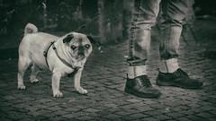 Dog | 2016 (Roland C. Vogt) Tags: olympus em5 markii | 75mm f18 dog