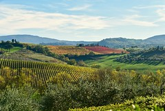 Tuscan Afternoon (armct) Tags: afternoon shadows vineyard vines autumn fall leaves italy tuscany montepulciano cervognano textures rows shades hillside mist haze