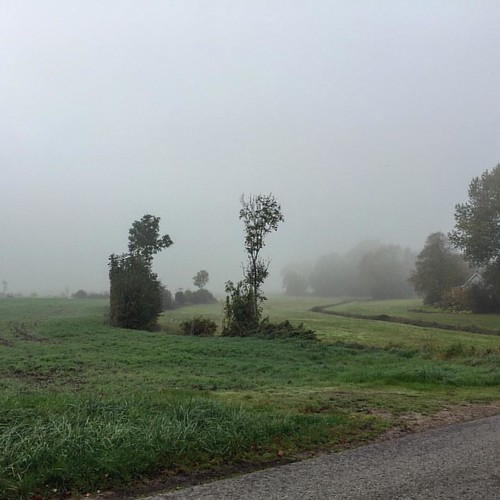 301/365 The Fog oder Der Nebel am Morgen #wp #photo365 #bilsbekblog #iphoneography #iphone6 #photooftheday #sorcerer86 #igers #ig_europe #ig_germany #igersdollrottfeld