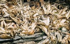 Nepal, Annapurna 2016 DSC05043 Date (Month DD, YYYY)-Edit.jpg (Rayne Chew) Tags: view massifs nature himalaya camp beauty 2016 base kampung annappurna nepal trekking ridge green remote peak mountains valley