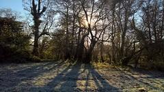Shepherd Meadows 29 November 2016 005 (paul_appleyard) Tags: shepher meadows sandhurst blackwater hampshire november 2016 lumia 950 autumn frost sunlight tres