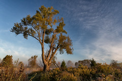 The Tree (Mark Heine Photos) Tags: cirrus wilsonflats grandriver tree clouds canada ontario markheine morning elora sunrise field westmontrose ca