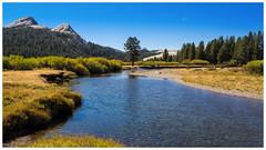 Tuolumne Meadows (EastStorm) Tags: tuolumnemeadows yosemite california forest meadow sierra