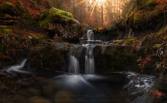 Parque Natural Sierra de Cebollera (sgsierra) Tags: cebollera parque natural rioja otoo paisaje landscape piedra dog perro cascadas rios agua watter