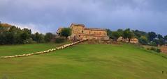 tutte a casa - Magnadorsa d'Arcevia (walterino1962) Tags: collina campo gregge pecore case nuvole nubi persona alberi arbusti erba luci ombre riflessi magnadorsadarcevia ancona pendio