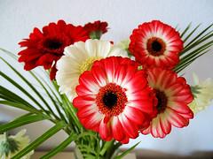 Un petit bouquet pour vous ! (jean-daniel david) Tags: