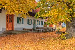 Goldener Herbst (Fotos4RR) Tags: herbst autumn herbstfarben autumncolors autumncolours autumnleaves herbstlaub buschenschank wein schilcherland steiermark wine styria austria österreich greisdorf