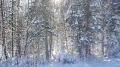 Are you ready? (mazzmn) Tags: winter cold snow trees sunlight pretty hcs explored