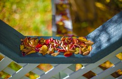 Fall Jewels