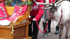 Saturday, 3rd, Getting ready to pull the sleigh MVI_0588 (tomylees) Tags: reindeer sleigh witham essex grove centre november 2016 saturday 3rd