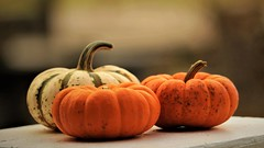 Happy Thanksgiving ! (BreezyWinter) Tags: happythanksgiving thanksgiving pumpkins holiday history traditional garden family autumn