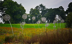 Trentham Woods and Wild flower area (Joan's Pics 2012) Tags: trenthamgardens dandelion sculpture landscape wildflowermeadow amywight