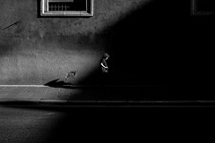 Roma - 2016 (Enzo D.) Tags: biancoenero blackandwhite streephotography bw italia italy olympus roma rome shadows sidewalk woman wwwenzodemartinocom lazio it