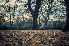 The Fall (akincansenol) Tags: 500px fall tree wood leaf nature season park outdoors no person landscape environment maple fair weather scenic autumn tranquil tranquility sonya6000 sel2870 sonyalpha